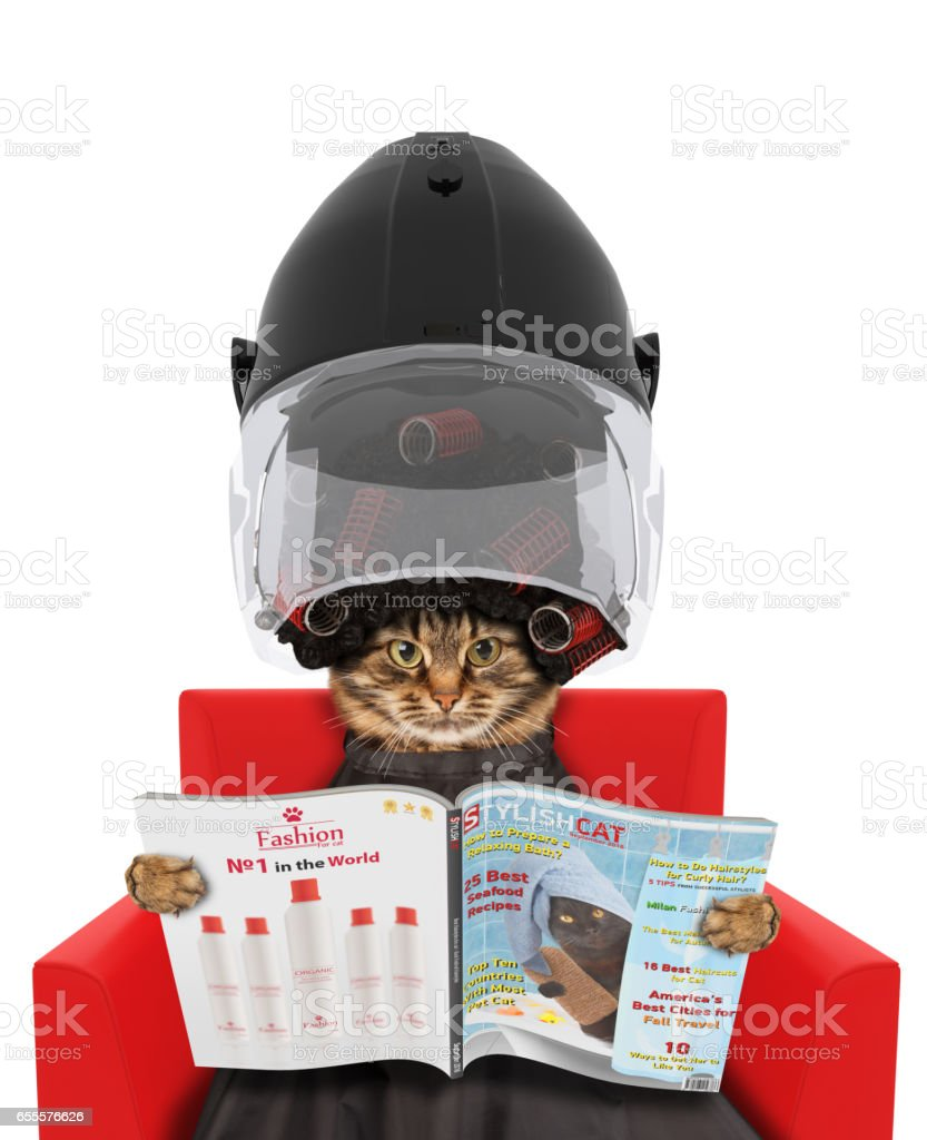 Funny cat under the drying hood reading a magazine on white background. In a beauty salon. - foto stock