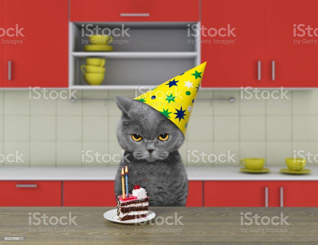 Chat drôle attend pour manger le gâteau au chocolat - Photo