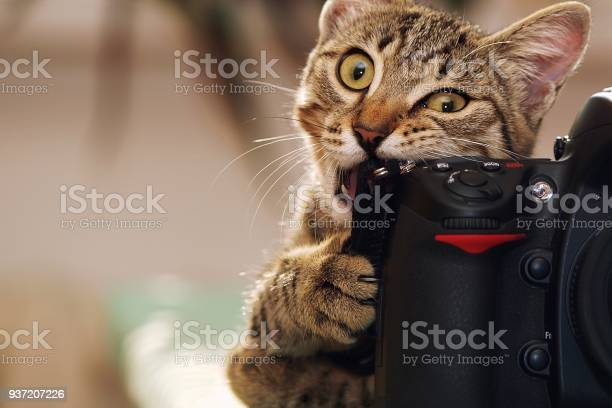 Funny cat with a camera picture id937207226?b=1&k=6&m=937207226&s=612x612&h=e2tv x1g2wvukxcfxsca0dlcxmfmm0ezdltg3ug2esu=