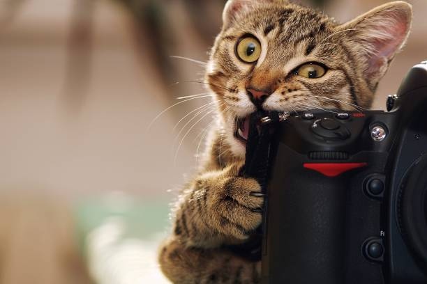 Funny cat with a camera stock photo