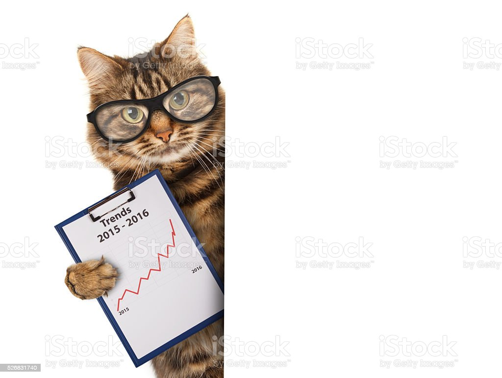Funny cat with a folder for presentations. Business scene. stock photo