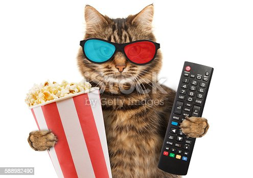 Funny cat with a remote control to TV