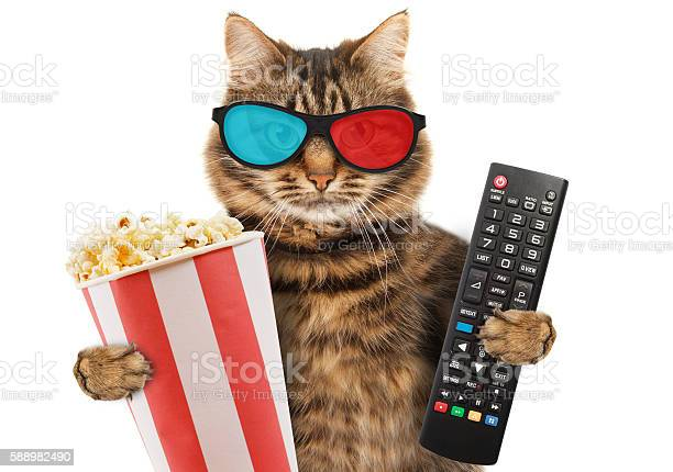 Funny cat with a remote control to tv picture id588982490?b=1&k=6&m=588982490&s=612x612&h=t8mp9 esb4bvlvjgpmg9r2wmrgpy9qsghatsdcf7qjm=