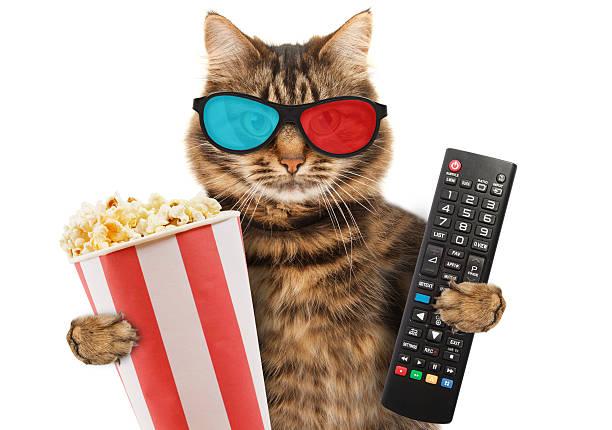 funny cat with a remote control to tv - telecomando background foto e immagini stock