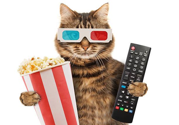 Funny cat with a remote control to tv picture id588982530?b=1&k=6&m=588982530&s=612x612&w=0&h=byur5aepqbzdun7db3rqhx0w bhaedfcx3isremgb4k=