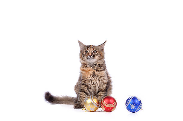 Funny cat with christmas toys isolated on white picture id186557866?b=1&k=6&m=186557866&s=612x612&w=0&h=zpdibjaiprbpggqwczthm j4dnsrsq18gnyoxdgpon4=