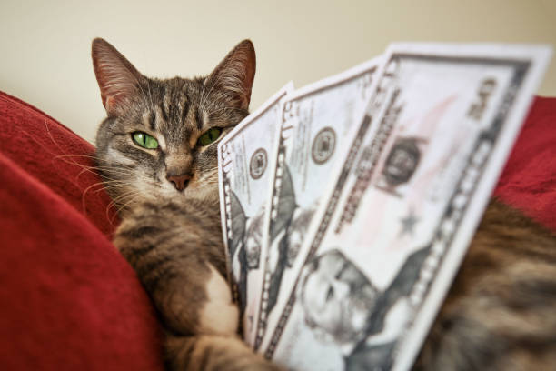 Funny cat with green eyes sitting with money in dollars on a red bed picture id1225363270?b=1&k=6&m=1225363270&s=612x612&w=0&h=qdxi7 q9piofmch kfx5g 38pzypb1y1mceyqzocuxs=