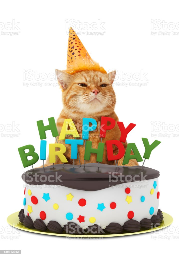 Terrific Funny Cat With Happy Birthday Cake Wearing A Party Hat Isolated On Funny Birthday Cards Online Elaedamsfinfo