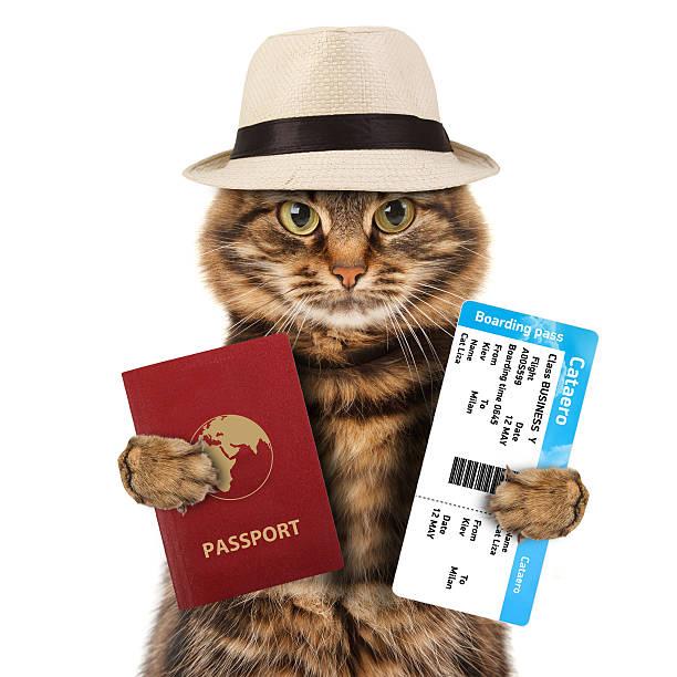 funny chat avec un passeport et le billet d'avion - valise humour photos et images de collection