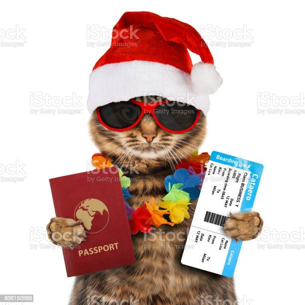 Funny cat with passport and airline ticket wearing a christmas hat picture id836150588?b=1&k=6&m=836150588&s=612x612&h=3kphhtxitgusj3hayfehmyab3nq1l6y7nom1oosej1c=