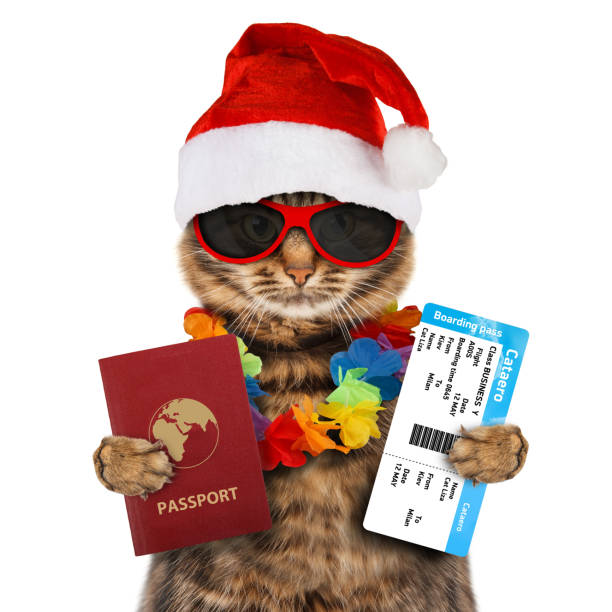 Funny cat with passport and airline ticket wearing a christmas hat picture id836150588?b=1&k=6&m=836150588&s=612x612&w=0&h=pmfqliufqtppinp 8uun3dihsqjr9ky4f1fuqpfoiry=