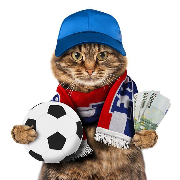 lustige katze mit fußball auf weißem hintergrund. - französisch übungen stock-fotos und bilder