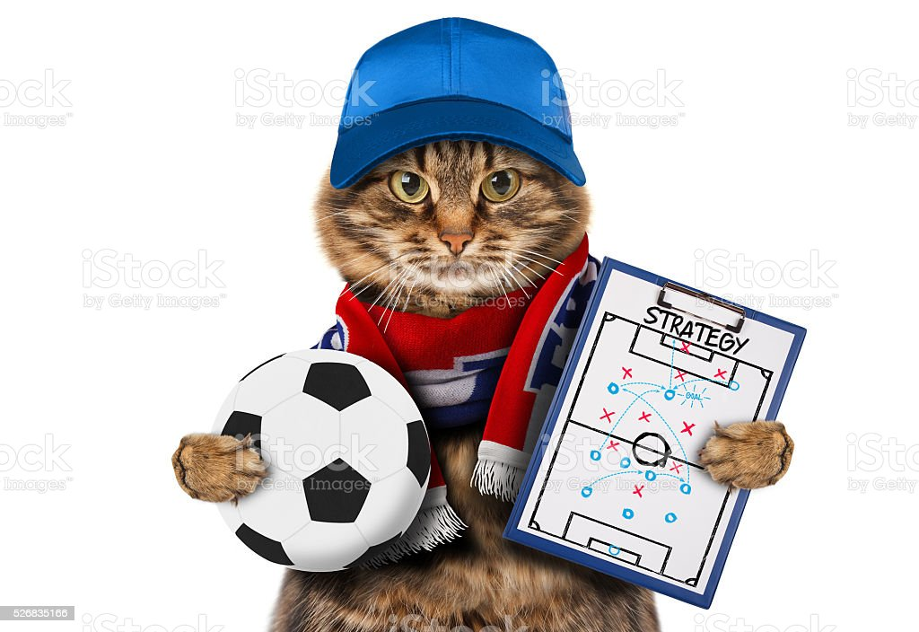 Funny cat with soccer ball on white background. stock photo