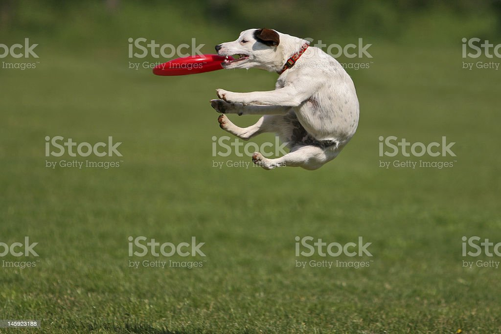 Funny catching royalty-free stock photo