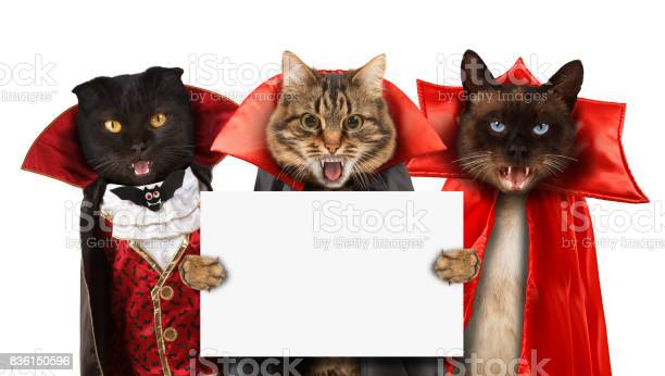 Funny cats are celebrating a halloween and wearing a suit of vampire picture id836150596?b=1&k=6&m=836150596&s=612x612&h=w8l0ns9g3dm99iuovgmpq nhws8s00x7uqcw3cgclq8=