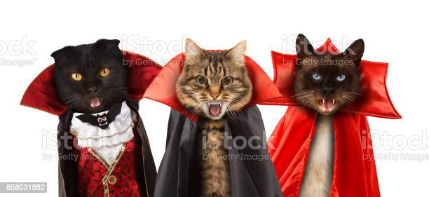 Funny cats are celebrating a halloween and wearing a suit of vampire picture id858031882?b=1&k=6&m=858031882&s=612x612&h=suyauxg hbrxb1frln31hyvmrf7sw hx1gtmzhu jpi=