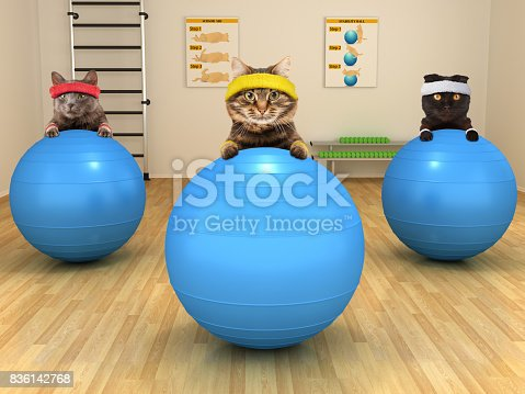 istock Funny cats are doing exercise with stability ball. Fitness club. 836142768