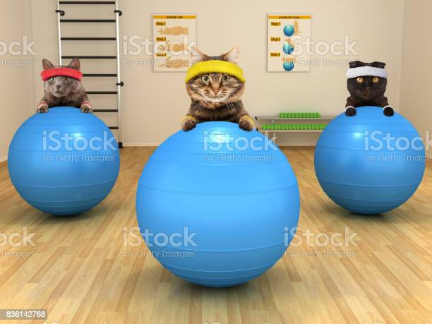 Funny cats are doing exercise with stability ball fitness club picture id836142768?b=1&k=6&m=836142768&s=612x612&h=tckqnfxltzr3k4elrfgzki2zyws2uuokm5rj94zseje=