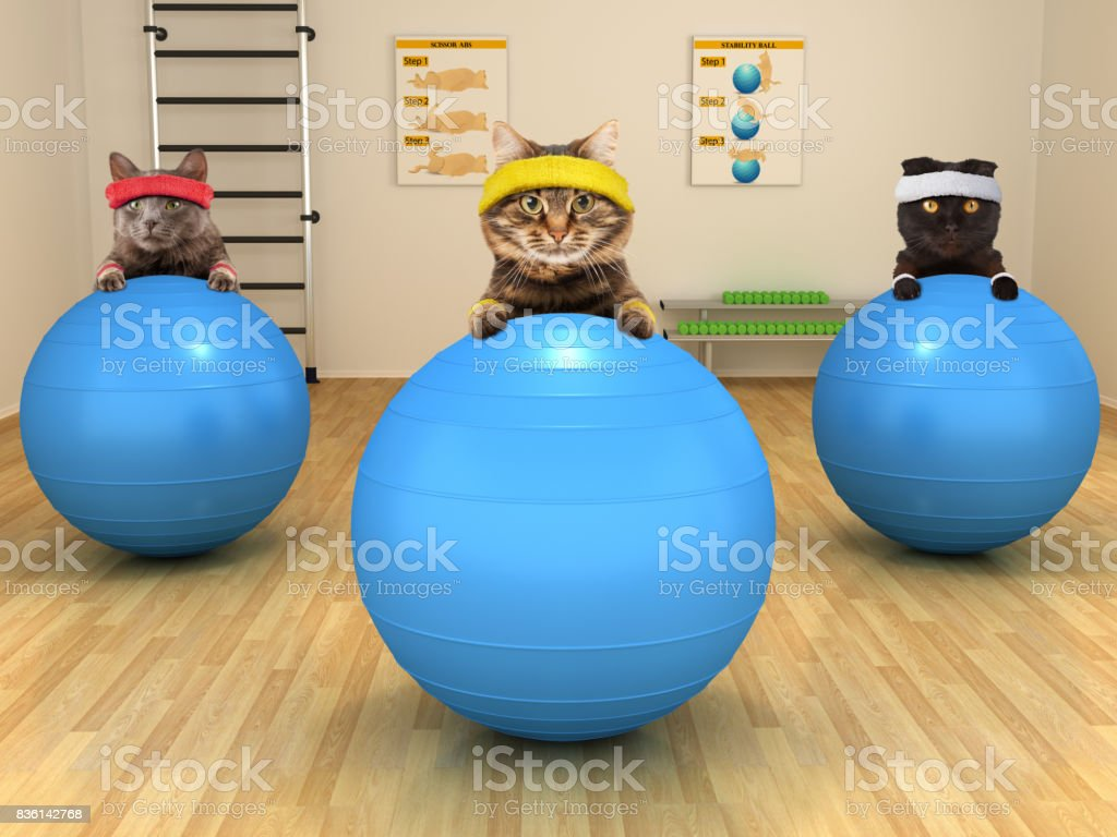 Funny cats are doing exercise with stability ball. Fitness club. stock photo