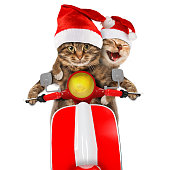 Funny cats are driving a moped. Humorous theme. Two cats are wearing in christmas hat and driving a moped.