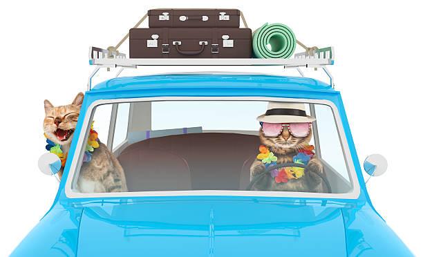 drôle chats partez en vacances en voiture. - valise humour photos et images de collection