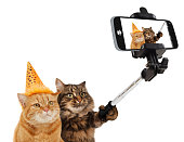 Funny cats are taking a selfie with smartphone camera.