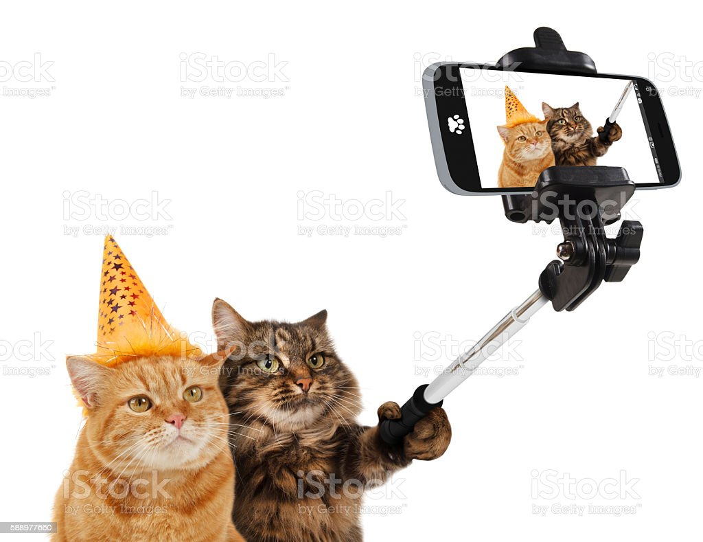 Funny cats are taking a selfie with smartphone camera. - foto de acervo