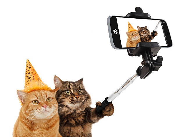 Funny cats are taking a selfie with smartphone camera. - foto de stock