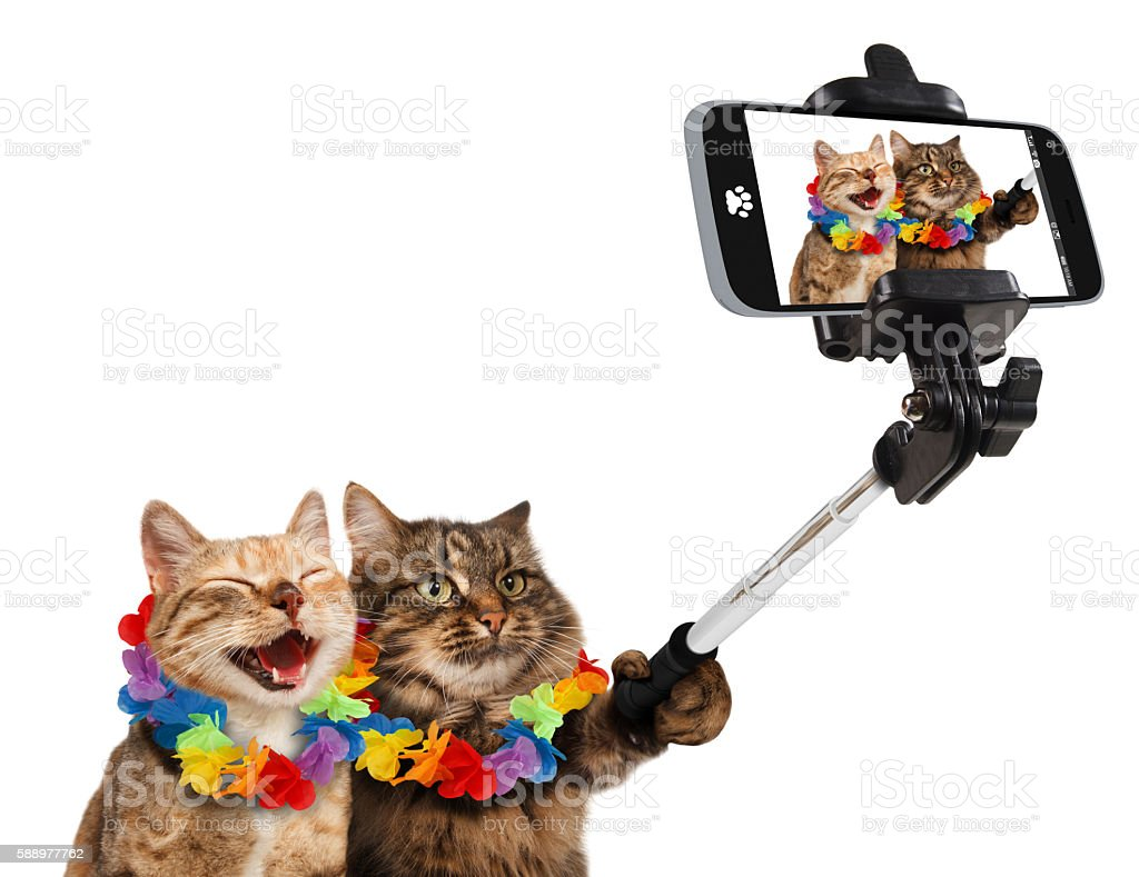 Funny cats are taking a selfie with smartphone camera. stock photo