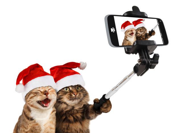lustige katzen nehmen ein selbstporträt mit smartphone-kamera. sie tragen weihnachtsmützen. selfie partei. - katze weihnachten stock-fotos und bilder