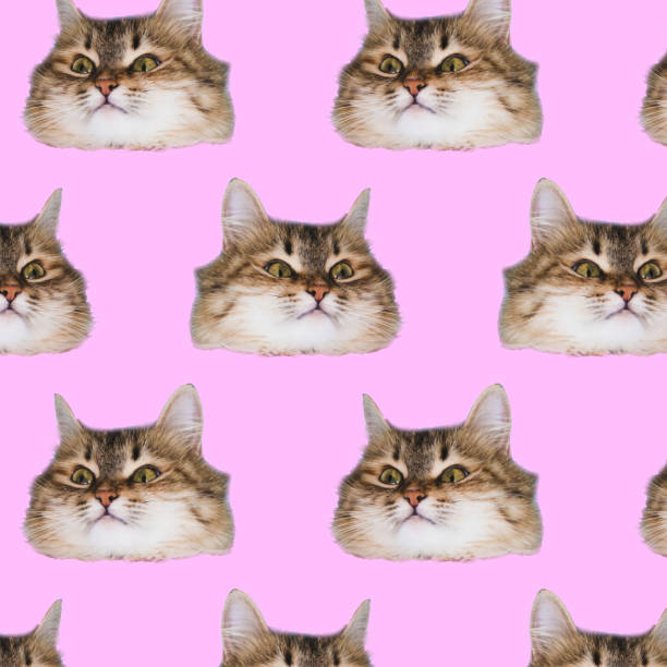 Funny cat's  heads on pink background. stock photo