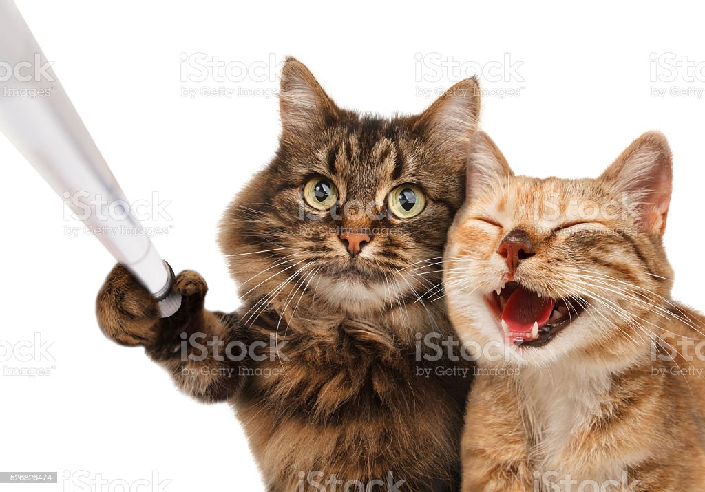 Funny cats - Self picture. Selfie stick in his hand. stock photo