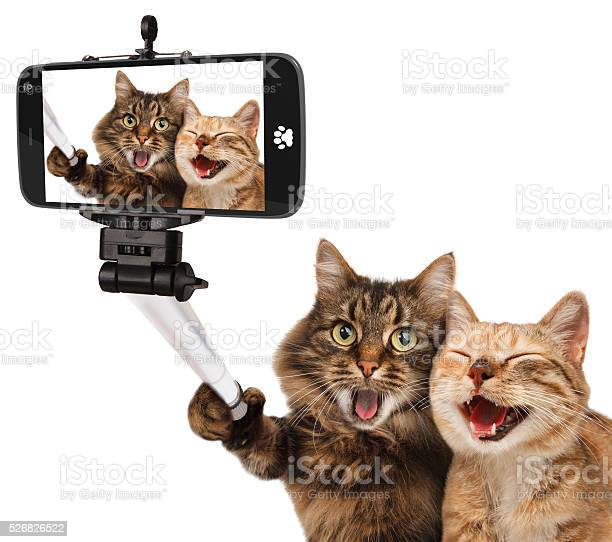 Funny cats self picture selfie stick in his hand picture id526826522?b=1&k=6&m=526826522&s=612x612&h=decf7fw6uoy4jyyf489sudekfiju8ejlhyupkfbzcci=