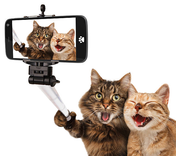 Funny cats self picture selfie stick in his hand picture id526826522?b=1&k=6&m=526826522&s=612x612&w=0&h=et2m4dxcgbqu84cwr 0wm7vibd22cm0dmkp7hicl978=