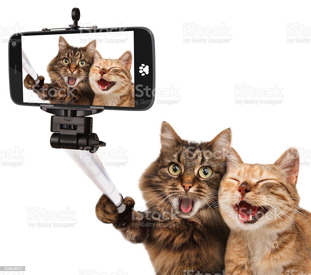 Drôle chats-image en libre-service. Bras télescopique pour smartphone dans sa main. - Photo