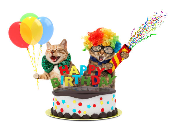 Funny cats with petard and birthday cake they are wearing festive picture id836142770?b=1&k=6&m=836142770&s=612x612&w=0&h=ae9imjefpa2paz1 kpnrnyh1qo7na47hpexapk nxce=