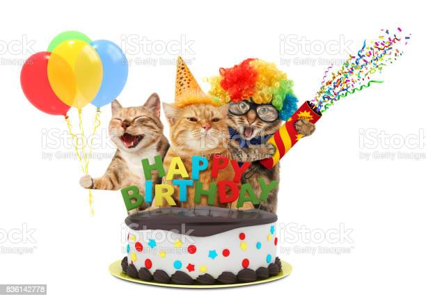 Funny cats with petard and birthday cake they are wearing festive picture id836142778?b=1&k=6&m=836142778&s=612x612&h=uebipfusugp4eke9n113s1yv qprlefrizllmsph49e=