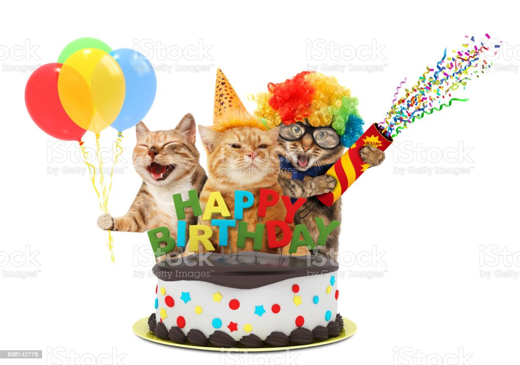 Funny cats with petard and birthday cake. They are wearing festive clothes, isolated on white background. stock photo