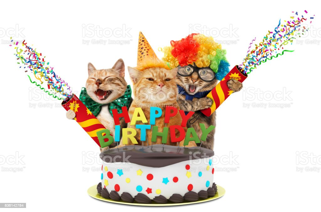 Funny Cats With Petard And Birthday Cake They Are Wearing Festive
