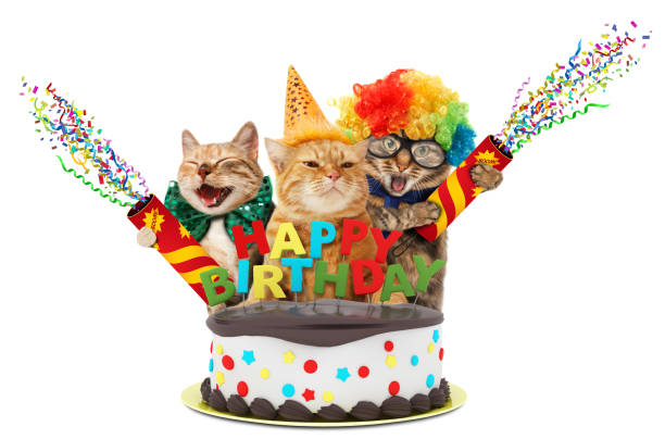 Funny cats with petard and birthday cake they are wearing festive picture id836142784?b=1&k=6&m=836142784&s=612x612&w=0&h=smafnc6vxzm ngtccfur1osrdojn gtz102ghqju3ow=