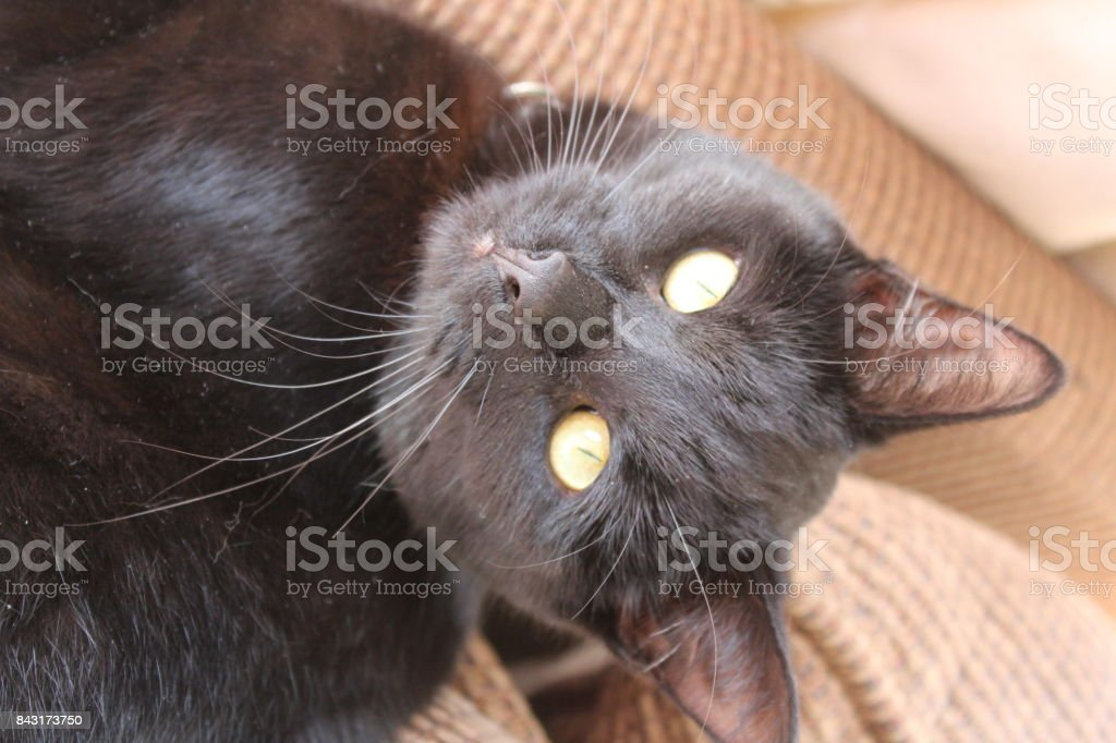 Funny Cat...upside down stock photo