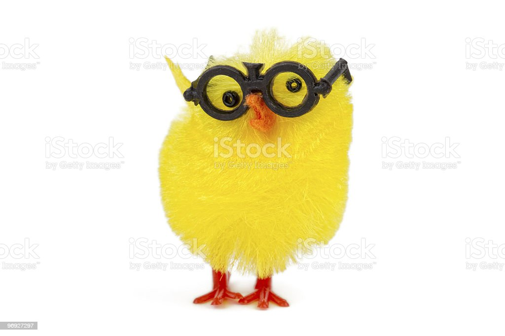 funny chick royalty-free stock photo