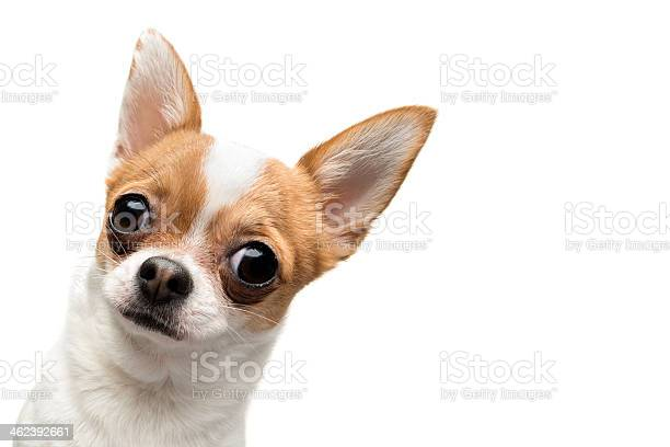 Funny chihuahua peeping out the frame picture id462392661?b=1&k=6&m=462392661&s=612x612&h=3l0rvx 0roo5cv3orb0twknjewve8blso0qlbzofqrm=