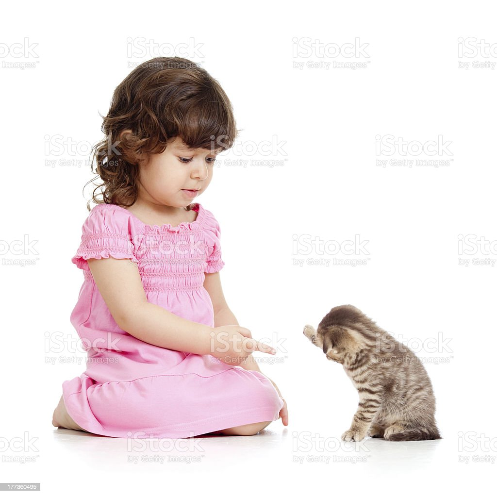 funny child playing with Scottish cat kitten royalty-free stock photo