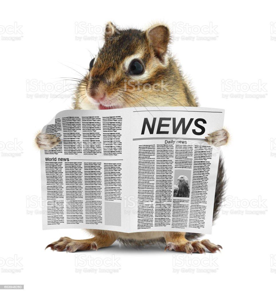 Lustige Streifenhörnchen Lesen Zeitung Nachrichtenkonzept Stock ...