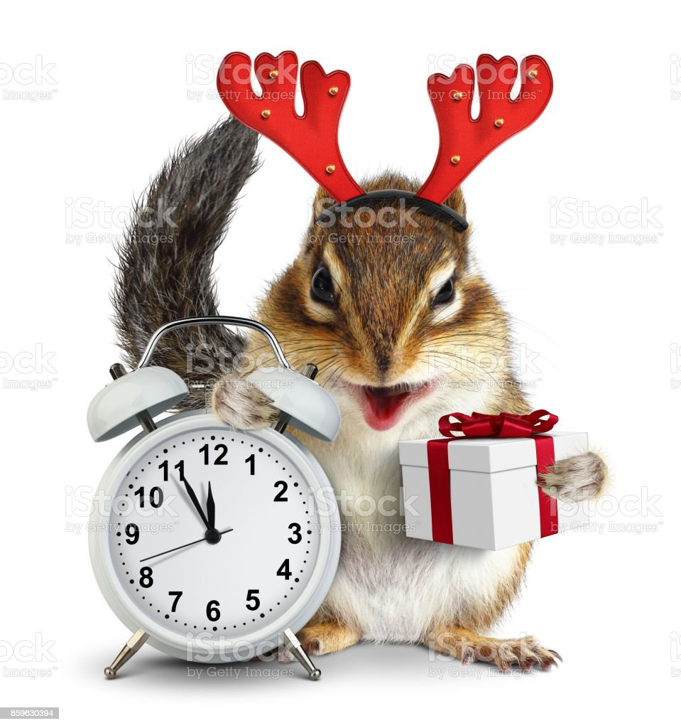 Funny chipmunk with christmas gift box and deer horns stock photo