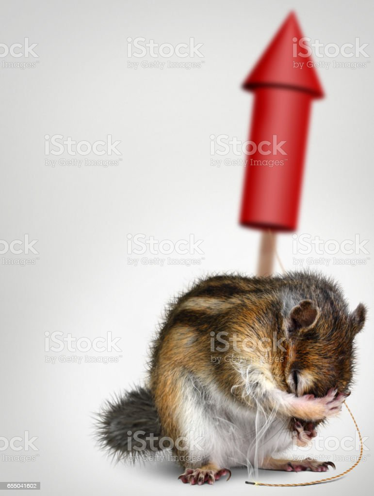 Funny chipmunk with fireworks, holiday background stock photo