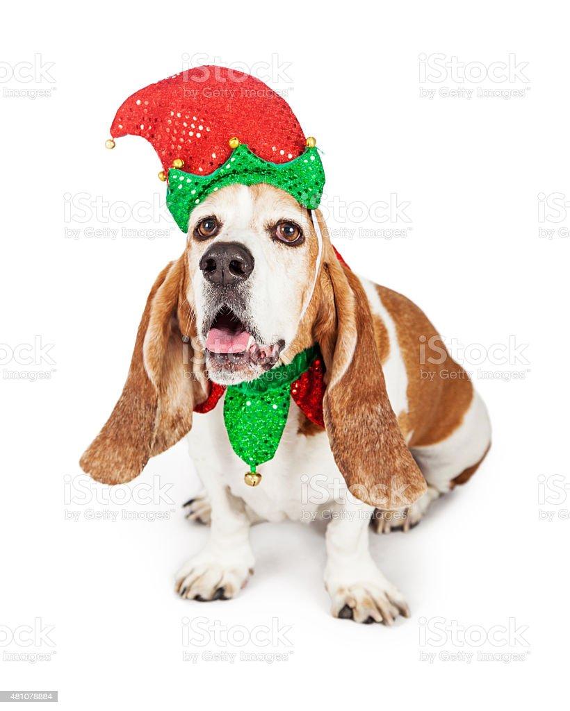 Funny Christmas Elf Basset Hound Dog Stock Photo Download Image Now Istock