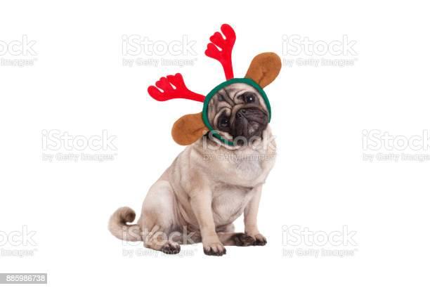 Funny christmas pug puppy dog sitting down wearing reindeer antlers picture id885986738?b=1&k=6&m=885986738&s=612x612&h=gkbum1jvlofud6rj9xbu2st7ijmfxrjm936qwx9my9g=