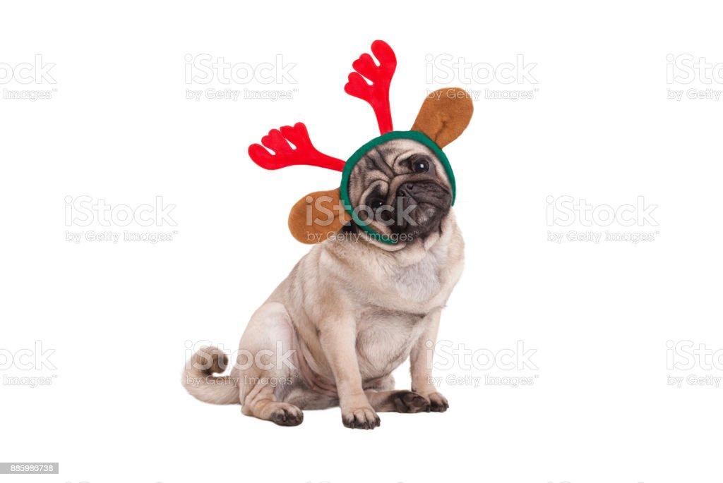 grappige kerst pug puppy hondje zitten, het dragen van rendieren geweien DIADEEM foto